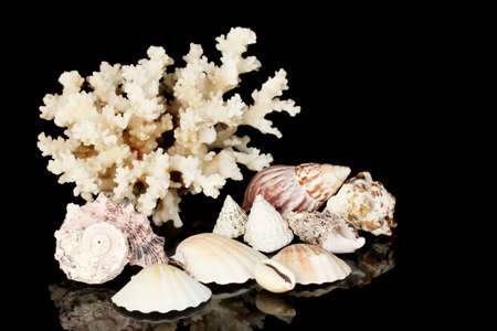 Sea coral with shells isolated on black photo