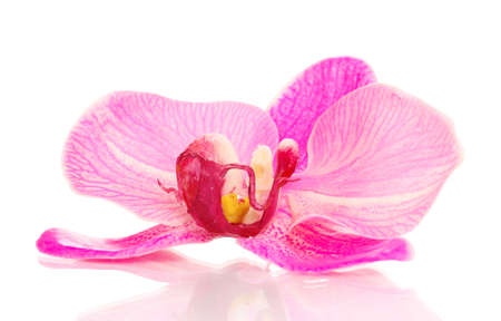 Beautiful orchid flower isolated on white photo