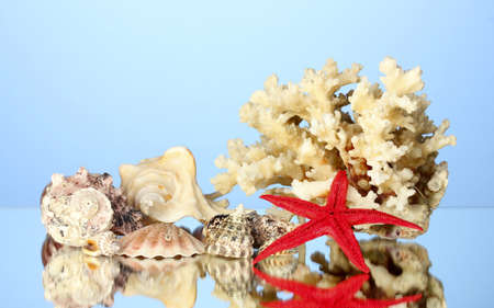 goniopora: Sea coral with shells on blue background close-up