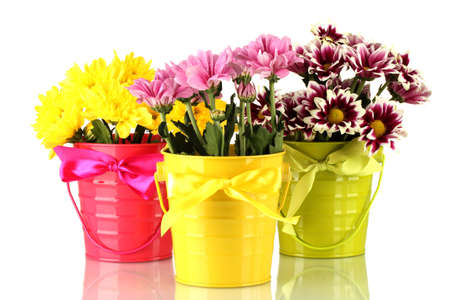 beautiful bouquet of chrysanthemums in a bright colorful buckets isolated on white photo