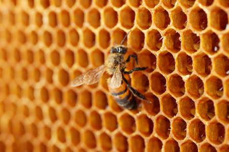abejas panal: amarillo hermoso panal con la miel y la abeja, fondo