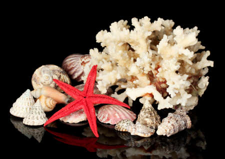 goniopora: Sea coral with shells isolated on black