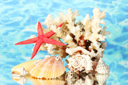 Sea coral with shells on water background close-up