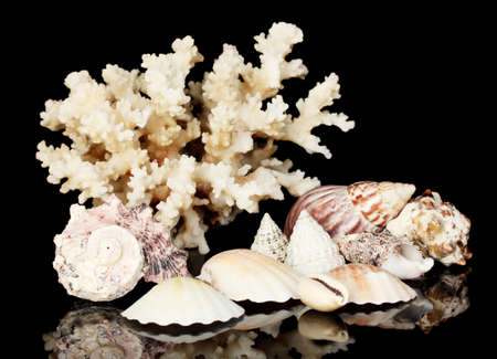 hard coral: Sea coral with shells isolated on black
