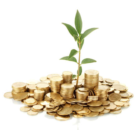 plant growing out of gold coins isolated on white Stock Photo - 15149402