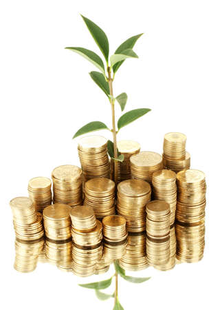 pile of money: plant growing out of gold coins isolated on white