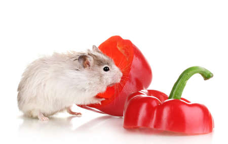Cute hamster and pepper salad isolated white Stock Photo