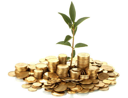 plant growing out of gold coins isolated on white Stock Photo - 15505753