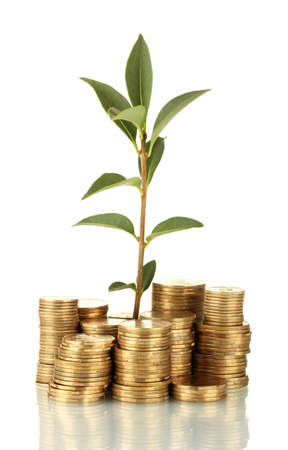 plant growing out of gold coins isolated on white Stock Photo - 15505762