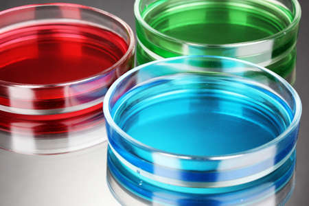 color liquid in petri dishes on grey background Stock Photo - 15496170