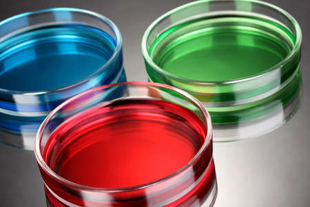 color liquid in petri dishes on grey background Stock Photo - 15282927