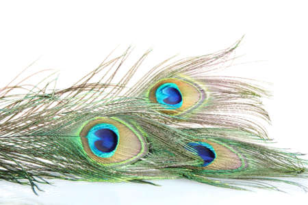 peacock eye: Peacock feathers on white background close-up