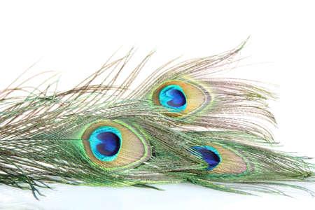 piuma di pavone: Piume di pavone su sfondo bianco close-up