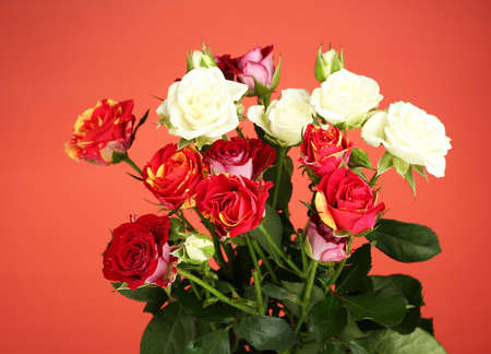 Bouquet of beautiful roses on red background close-up photo