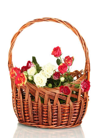Bouquet of beautiful roses in a wicker basket isolated on white photo