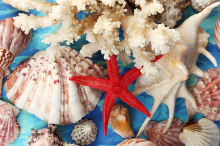 Sea coral with shells on blue background close-up photo