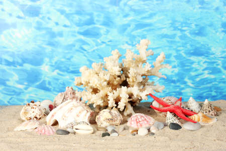 goniopora: Sea coral with shells on water background close-up