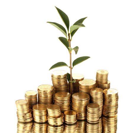 plant growing out of gold coins isolated on white Stock Photo - 15385898