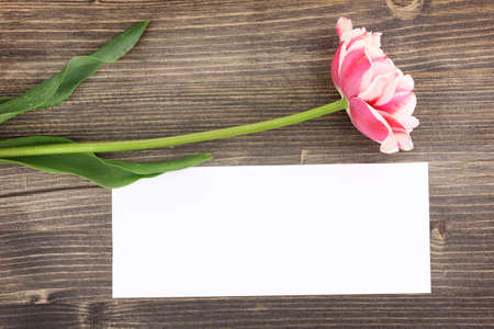 Beautiful tulip and card on wooden background Stock Photo - 15386731