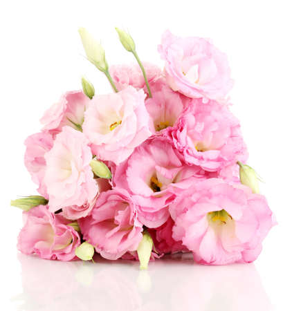 pink flowers: bouquet of eustoma flowers, isolated on white