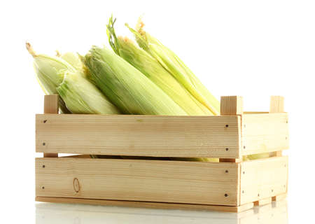 fresh corn in wooden box, isolated on white photo