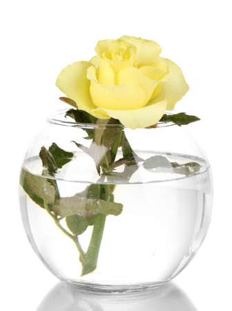 Beautiful yellow rose in glass vase isolated on white photo