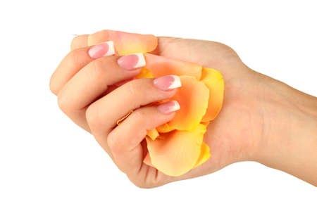 Yellow rose petals with woman's hand on white background Stock Photo - 15455844