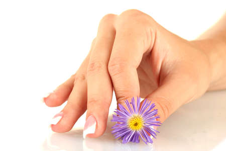 Purple chrysanthemum with woman's hand on white background Stock Photo - 15455980