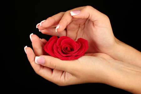 Red rose with woman's hands on black background Stock Photo - 15456266