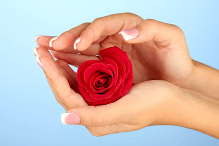 Red rose with woman's hands on blue background Stock Photo - 15456263