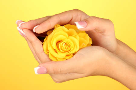 Yellow rose with woman's hands on yellow background Stock Photo - 15456199