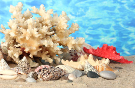 Sea coral with shells on water background close-up photo