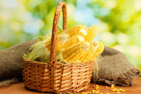 fresh corn in basket, on wooden table, on green background photo