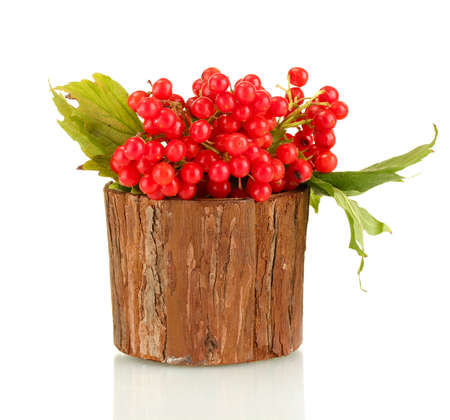 guelder rose berry: Ripe viburnum in a wooden bowl isolated on white