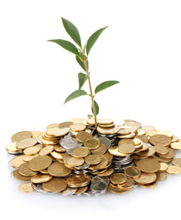 plant growing out of gold and silver  coins isolated on white background close-up Stock Photo - 15616211