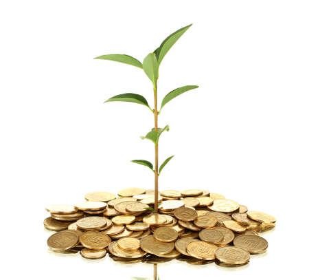 plant groeit uit van gouden munten geïsoleerd op witte achtergrond close-up Stockfoto