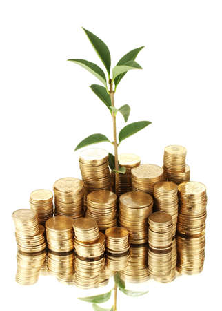 plant growing out of gold coins isolated on white Stock Photo - 15664343