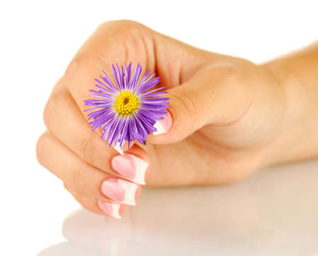 Purple chrysanthemum with woman's hand on white background photo