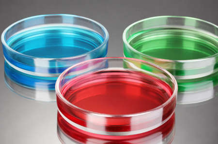 color liquid in petri dishes on grey background Stock Photo