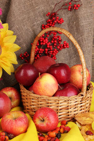 Colorful autumn still life with apples close-up photo