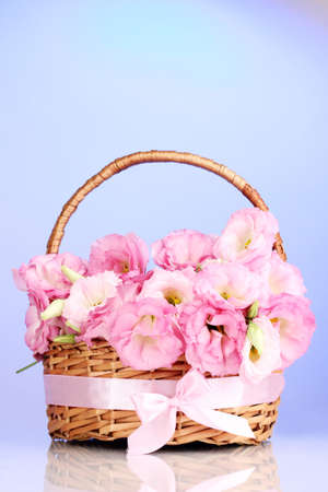 bouquet of eustoma flowers in basket, on blue background photo