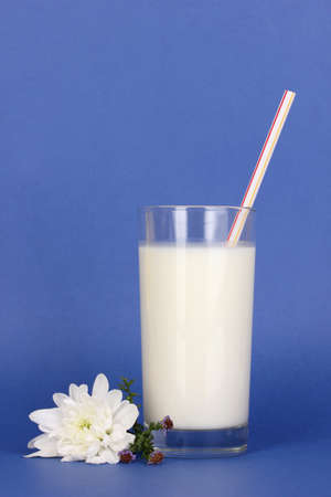 pasteurized: Glass of fresh new milk with white flower on blue background Stock Photo