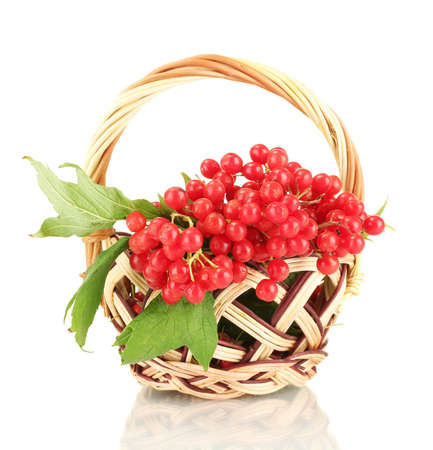 guelder rose berry: Ripe viburnum in a wicker basket isolated on white Stock Photo