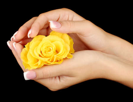 Yellow rose with woman's hands on black background photo