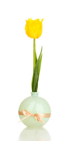 Beautiful tulip in vase isolated on white