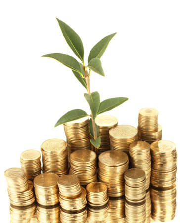 plant growing out of gold coins isolated on white Stock Photo - 15924196
