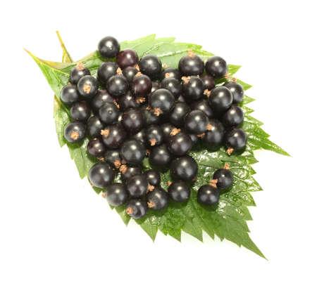 Fresh black currant isolated on white photo