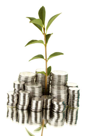 make an investment: plant growing out of silver coins isolated on white background close-up
