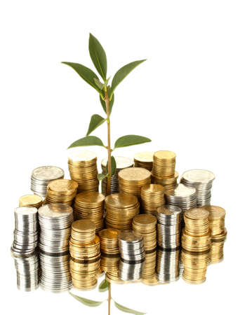 plant growing out of gold and silver  coins isolated on white background close-up Stock Photo - 16036364