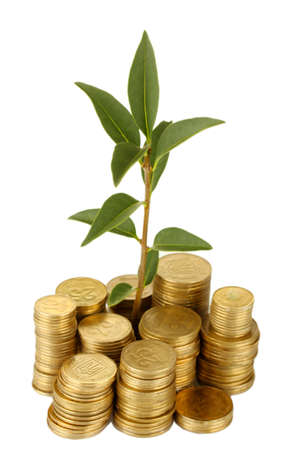 plant growing out of gold coins isolated on white Stock Photo - 16107261